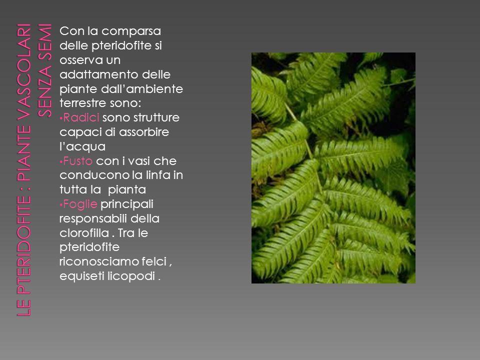 Le pteridofite : piante vascolari senza semi