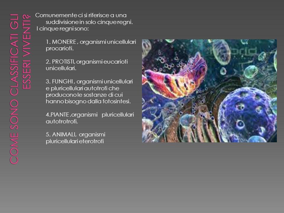 Come sono classificati gli esseri viventi