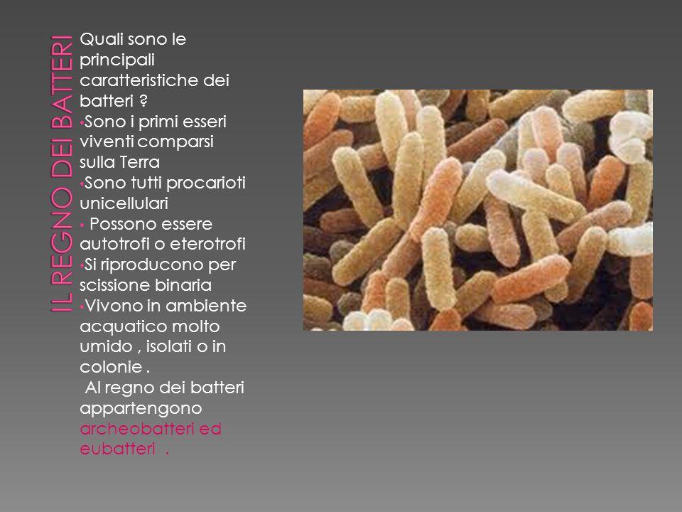 IL REGNO DEI BATTERI Quali sono le principali caratteristiche dei batteri Sono i primi esseri viventi comparsi sulla Terra.