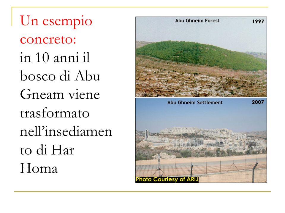 Un esempio concreto: in 10 anni il bosco di Abu Gneam viene trasformato nell'insediamento di Har Homa