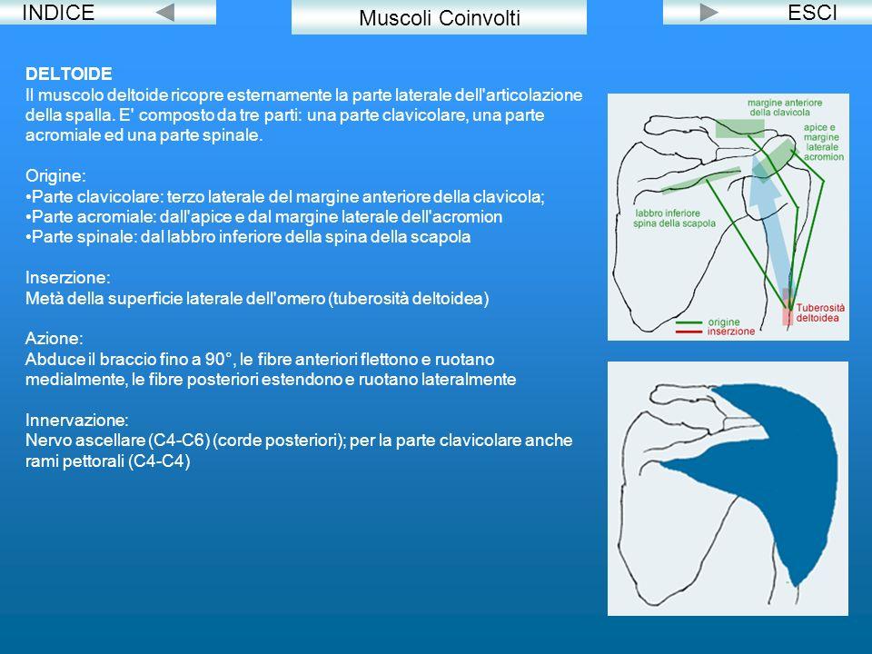 INDICE Muscoli Coinvolti ESCI DELTOIDE