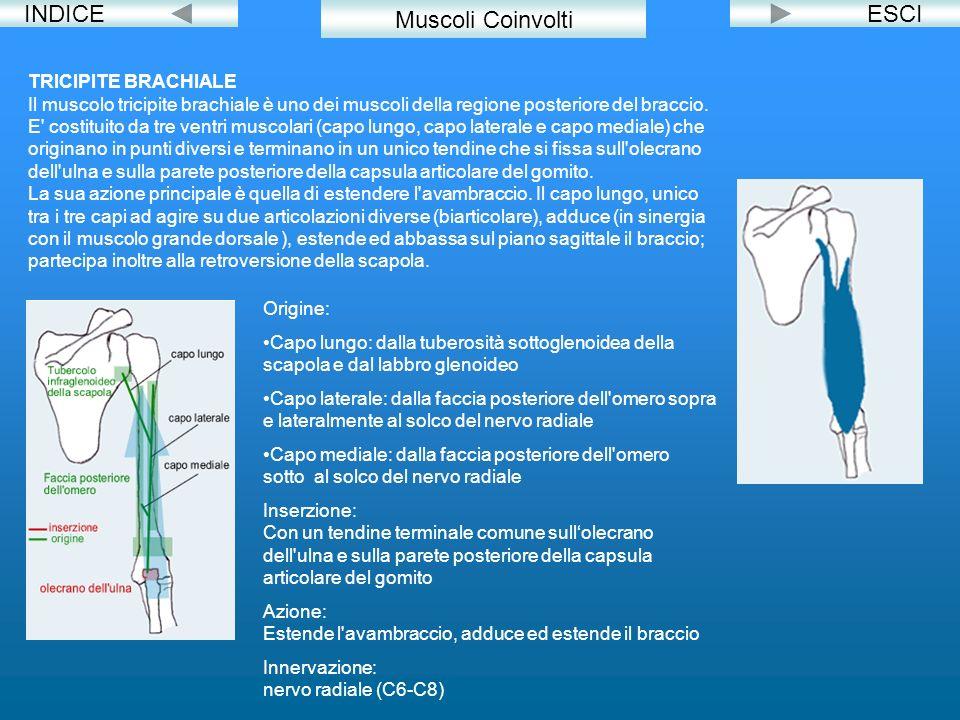 INDICE Muscoli Coinvolti ESCI TRICIPITE BRACHIALE