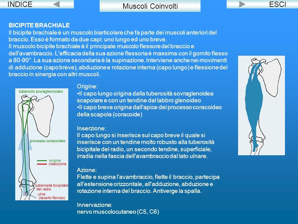 INDICE Muscoli Coinvolti ESCI BICIPITE BRACHIALE