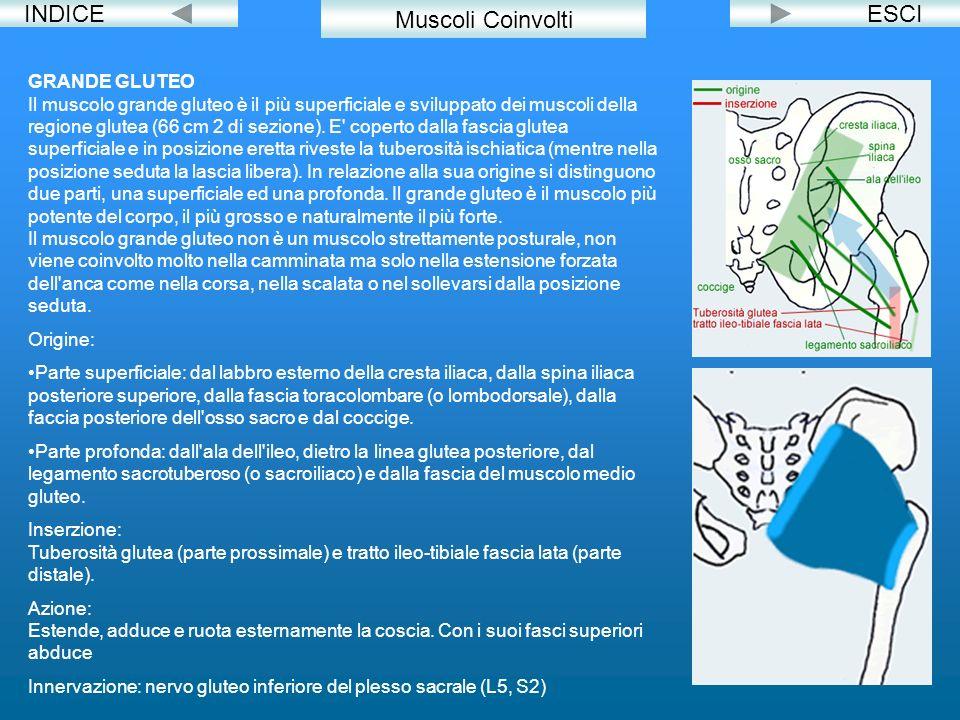 INDICE Muscoli Coinvolti ESCI