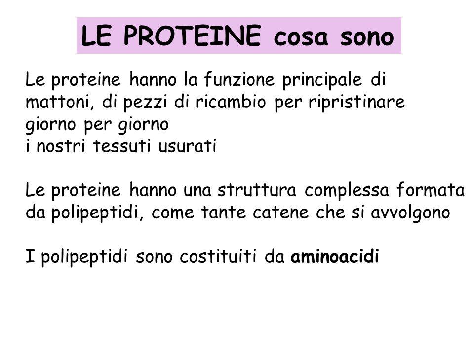LE PROTEINE cosa sono Le proteine hanno la funzione principale di