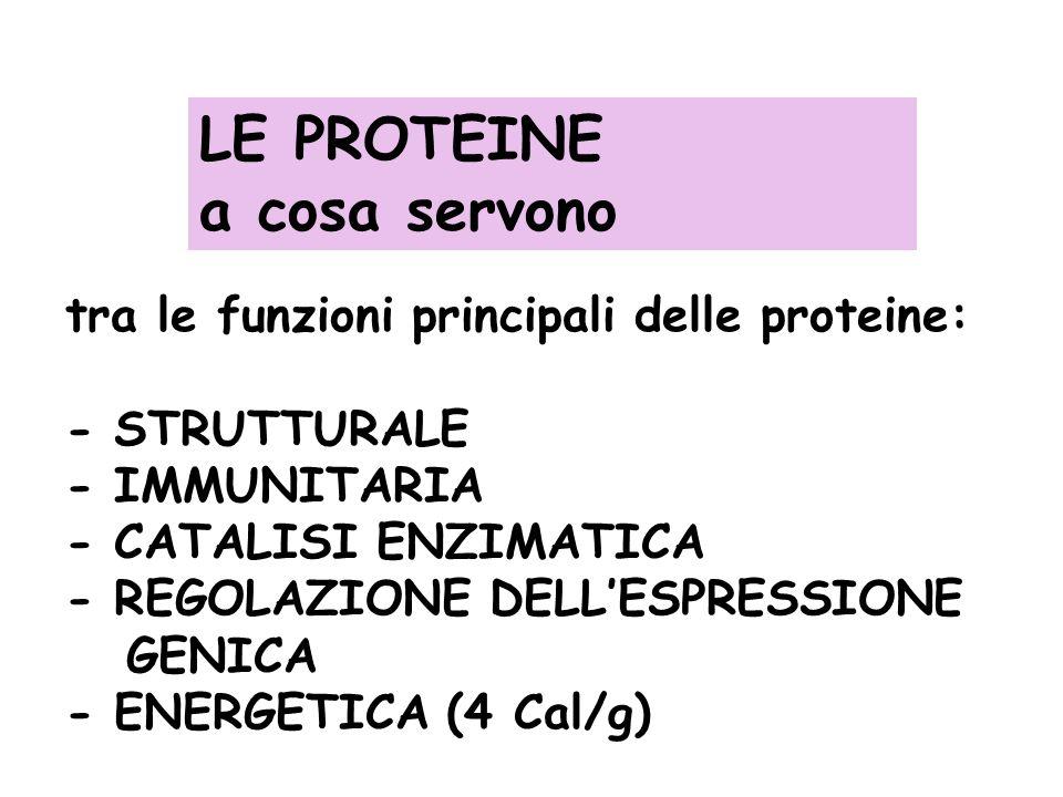 LE PROTEINE a cosa servono tra le funzioni principali delle proteine: