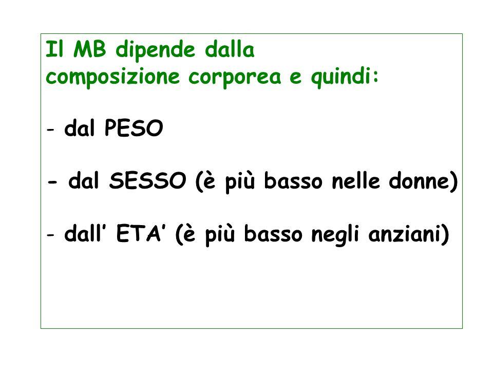 Il MB dipende dalla composizione corporea e quindi: dal PESO. - dal SESSO (è più basso nelle donne)