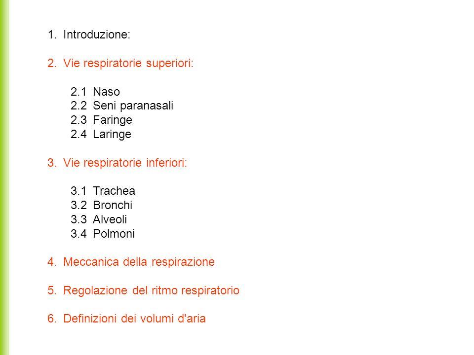 1. Introduzione: 2. Vie respiratorie superiori: 2.1 Naso. 2.2 Seni paranasali. 2.3 Faringe. 2.4 Laringe.