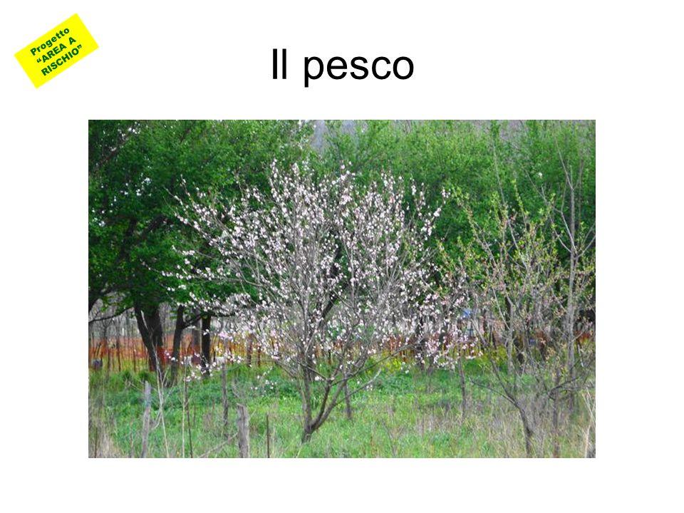 Progetto AREA A RISCHIO