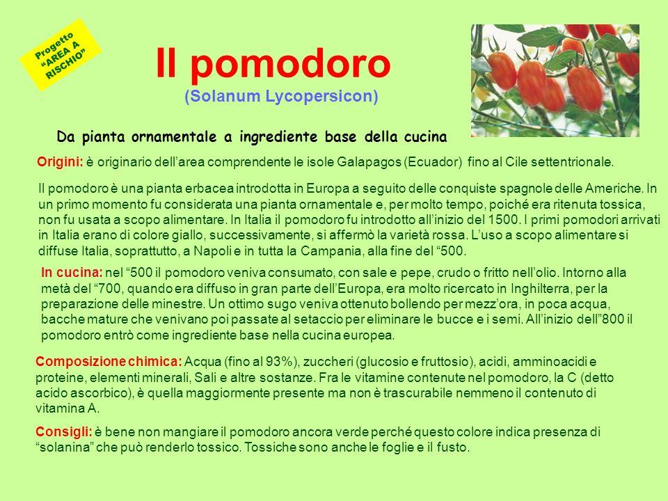 Progetto AREA A RISCHIO (Solanum Lycopersicon)
