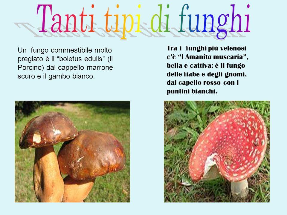 Tanti tipi di funghi
