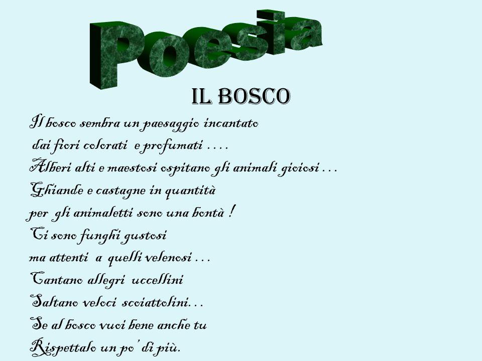 Poesia IL BOSCO Il bosco sembra un paesaggio incantato