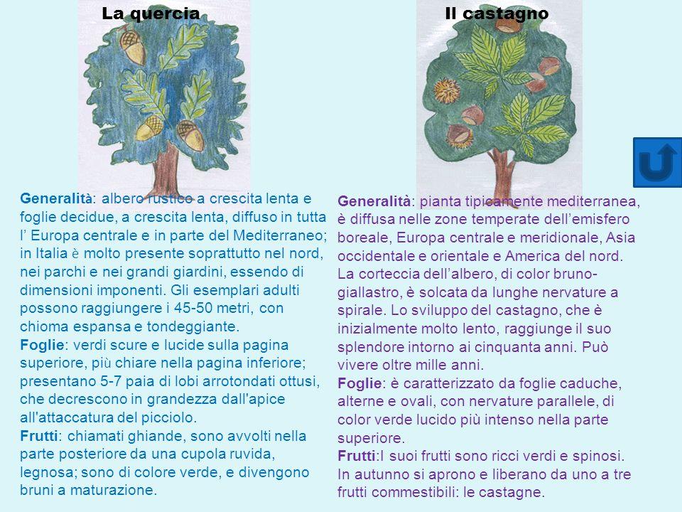 La quercia Il castagno.