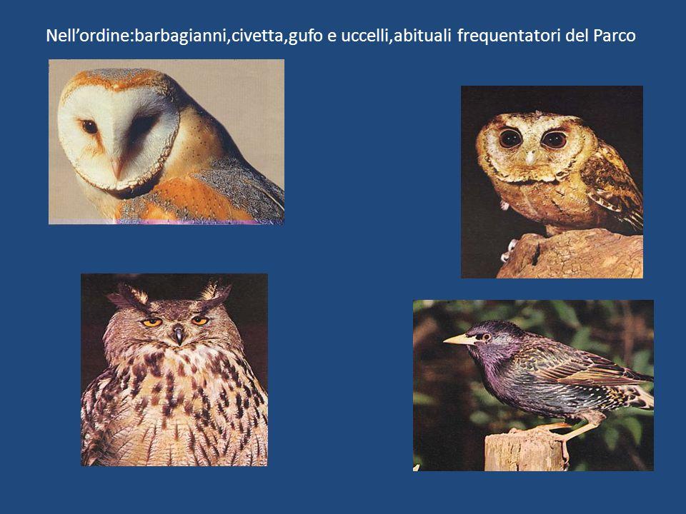 Nell'ordine:barbagianni,civetta,gufo e uccelli,abituali frequentatori del Parco