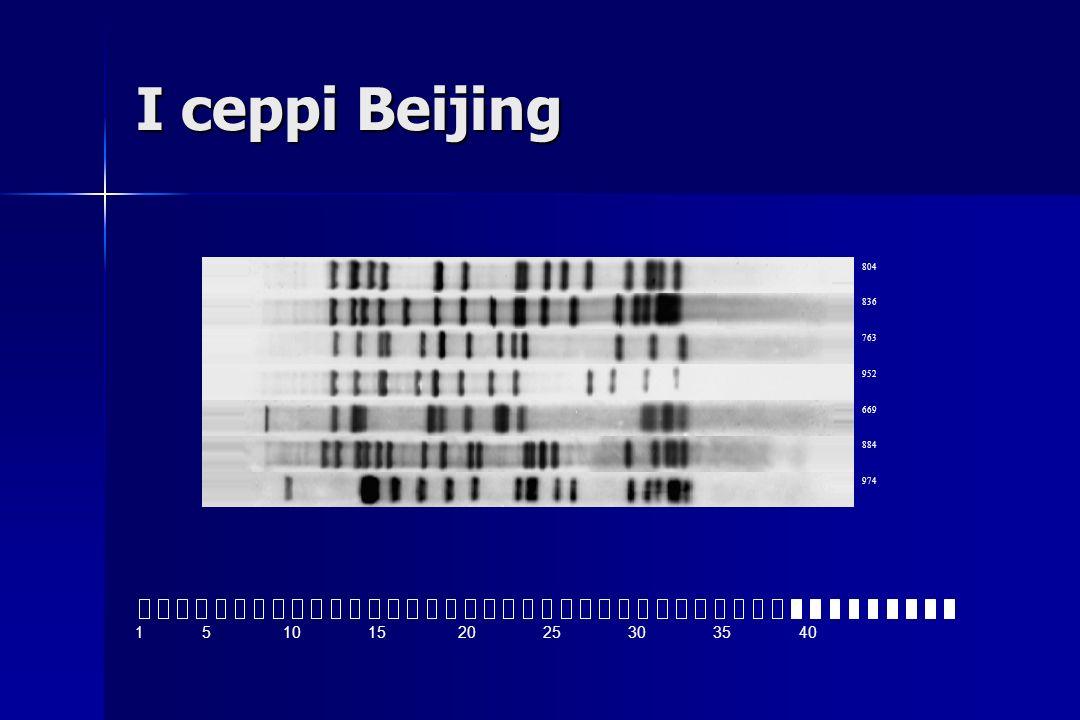 I ceppi Beijing 804. 836. 763. 952. 669. 884. 974.