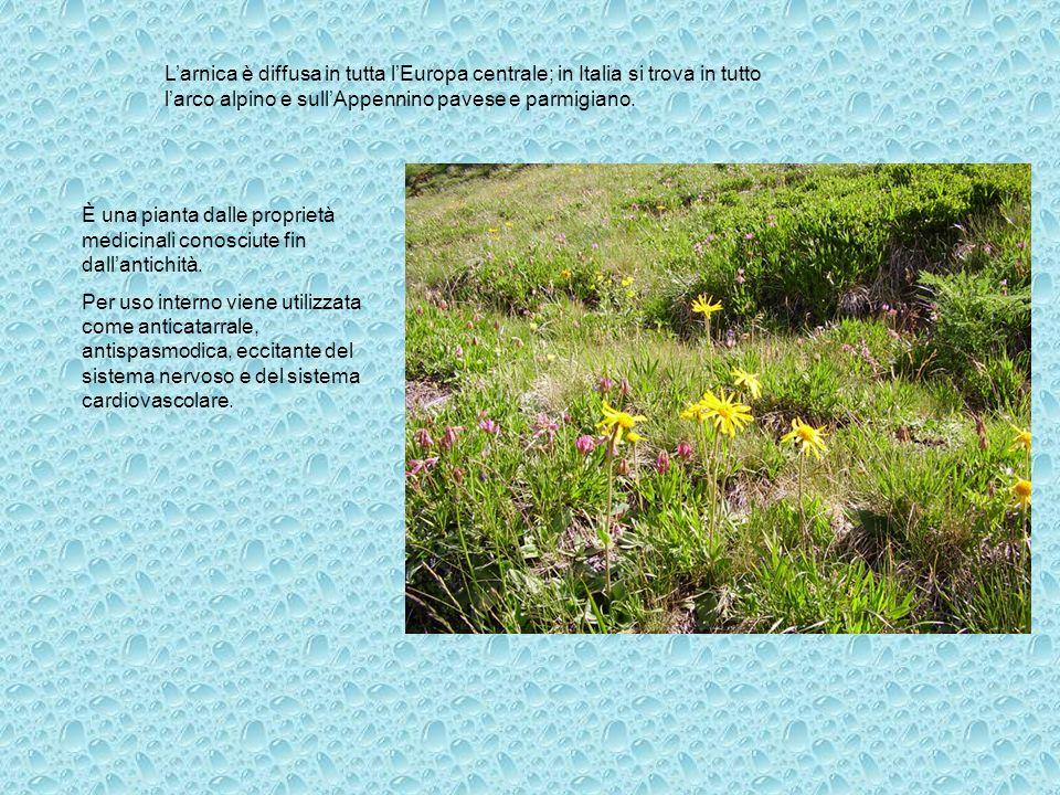 L'arnica è diffusa in tutta l'Europa centrale; in Italia si trova in tutto l'arco alpino e sull'Appennino pavese e parmigiano.