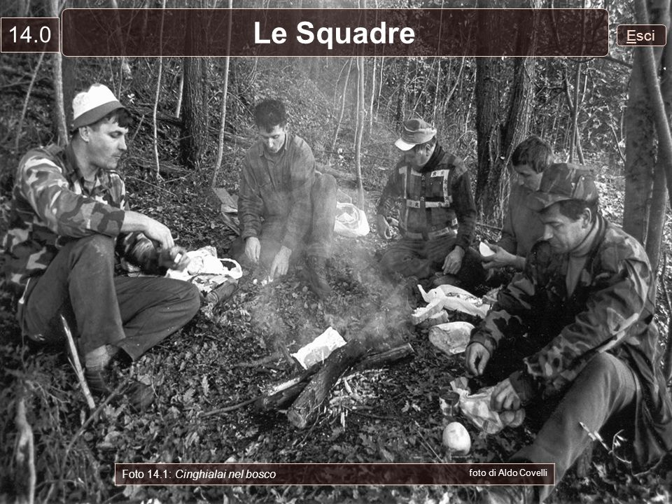 Le Squadre 14.0 Esci Foto 14.1: Cinghialai nel bosco