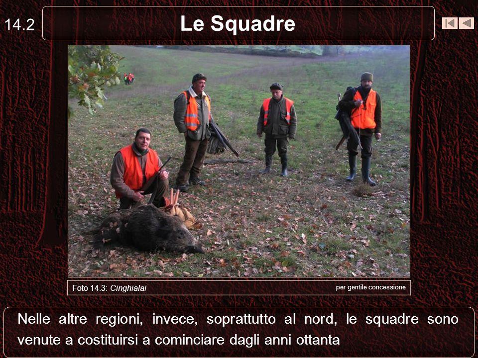 14.2 Le Squadre. Capriolo. Foto 14.3: Cinghialai. per gentile concessione.