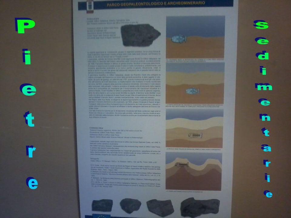 Pietre Sedimentarie