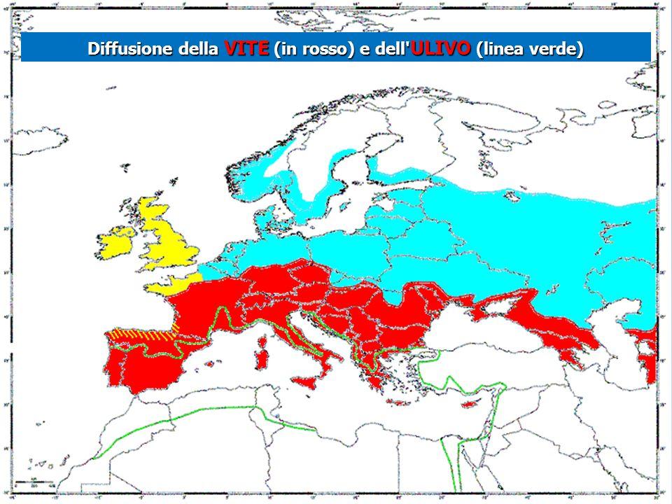 Diffusione della VITE (in rosso) e dell ULIVO (linea verde)