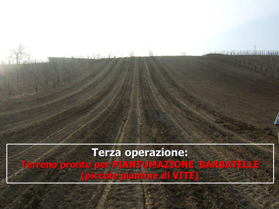 Terza operazione: Terreno pronto per PIANTUMAZIONE BARBATELLE