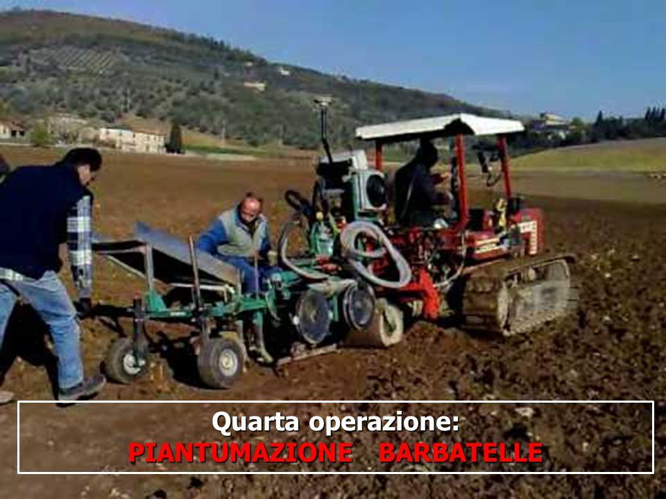 PIANTUMAZIONE BARBATELLE