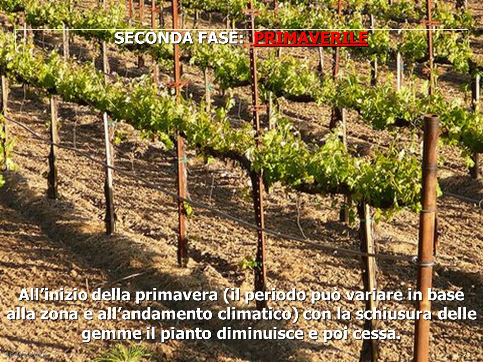 SECONDA FASE: PRIMAVERILE