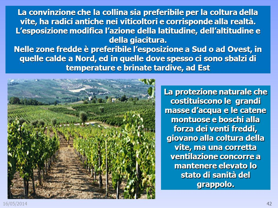 La convinzione che la collina sia preferibile per la coltura della vite, ha radici antiche nei viticoltori e corrisponde alla realtà.