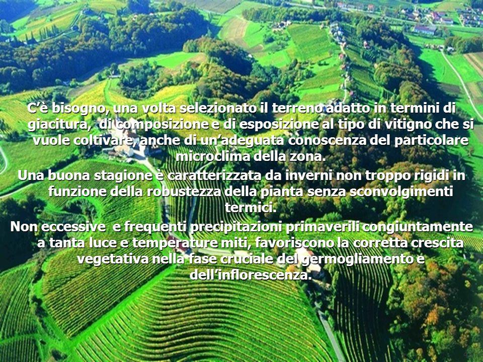C'è bisogno, una volta selezionato il terreno adatto in termini di giacitura, di composizione e di esposizione al tipo di vitigno che si vuole coltivare, anche di un'adeguata conoscenza del particolare microclima della zona.