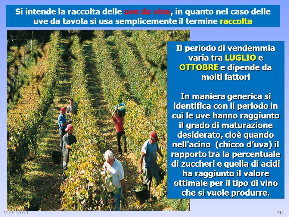 Si intende la raccolta delle uve da vino, in quanto nel caso delle uve da tavola si usa semplicemente il termine raccolta