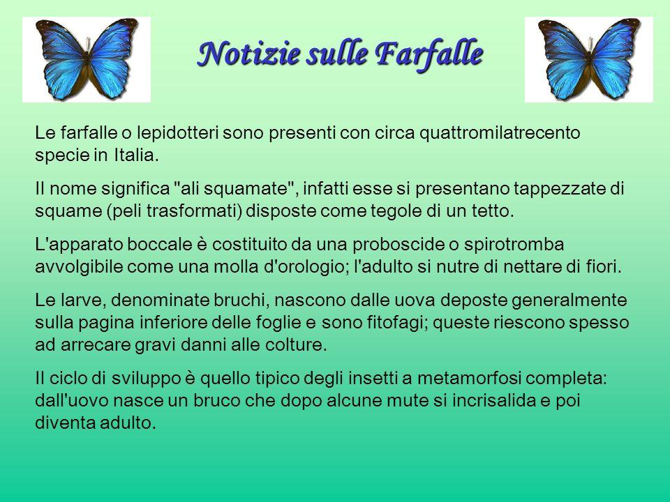 Notizie sulle Farfalle