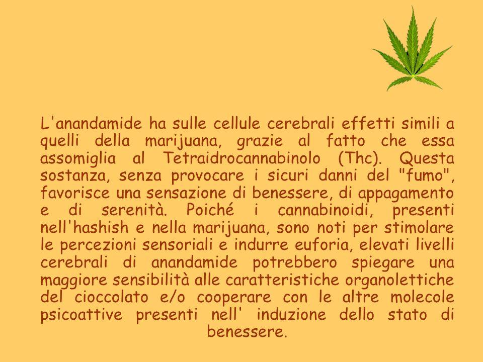 L anandamide ha sulle cellule cerebrali effetti simili a quelli della marijuana, grazie al fatto che essa assomiglia al Tetraidrocannabinolo (Thc).