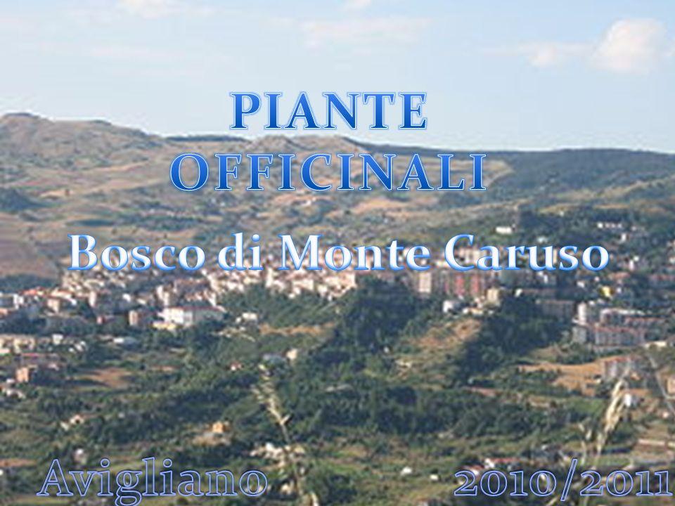 PIANTE OFFICINALI Bosco di Monte Caruso Avigliano 2010/2011