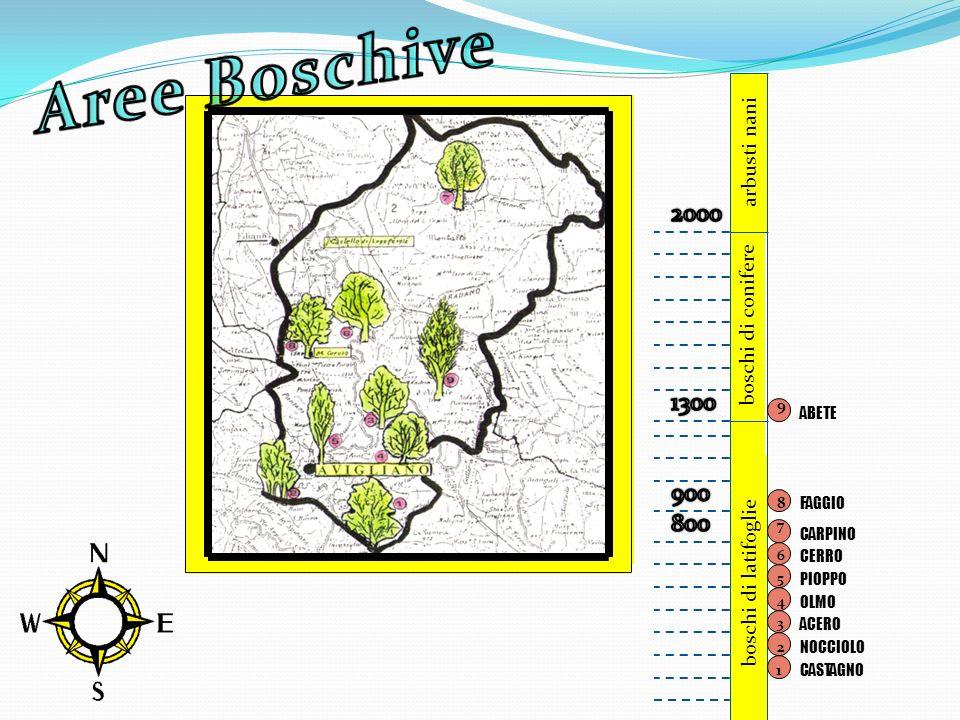 Aree Boschive 2000 1300 900 800 arbusti nani boschi di conifere