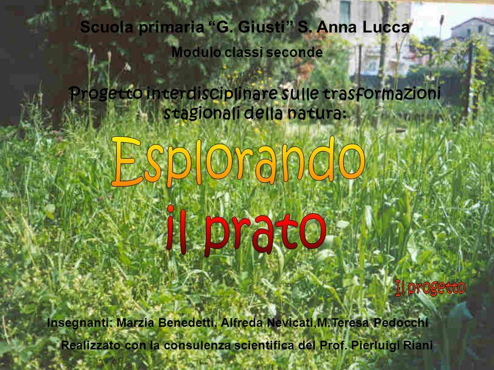 Esplorando il prato Scuola primaria G. Giusti S. Anna Lucca