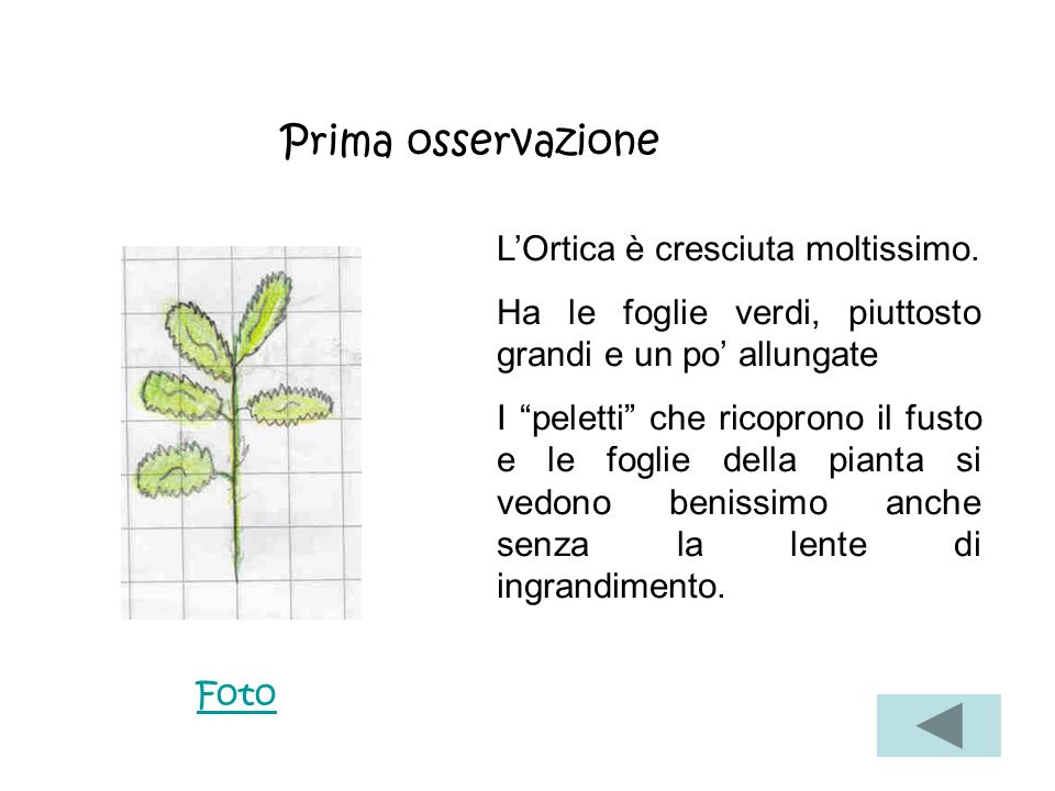 Prima osservazione L'Ortica è cresciuta moltissimo.