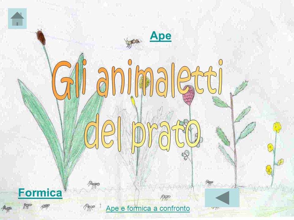 Ape Gli animaletti del prato Formica Ape e formica a confronto