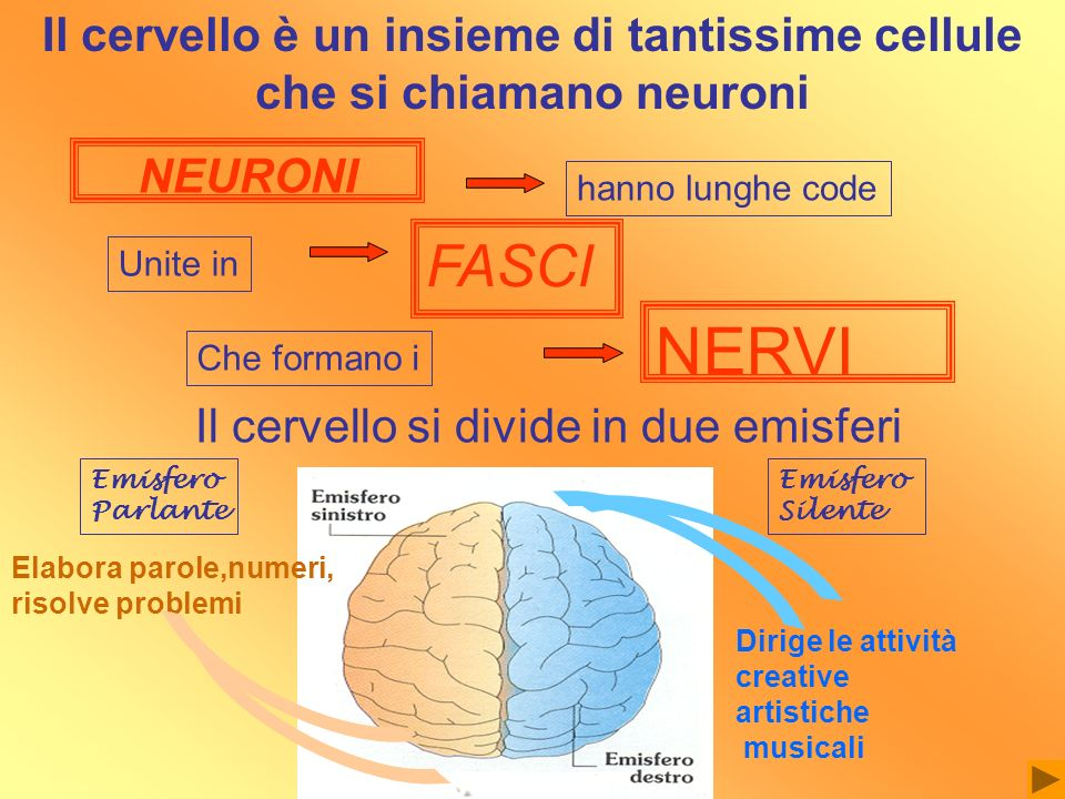 Il cervello è un insieme di tantissime cellule che si chiamano neuroni
