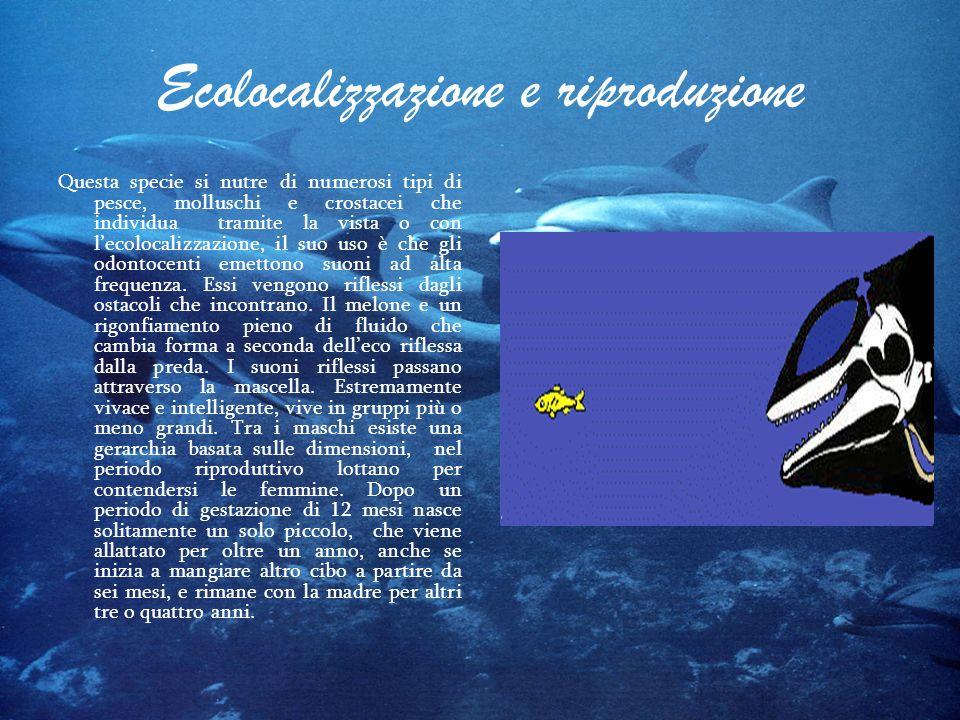 Ecolocalizzazione e riproduzione