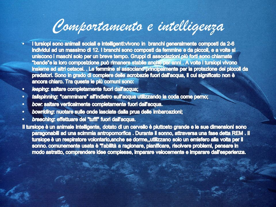 Comportamento e intelligenza