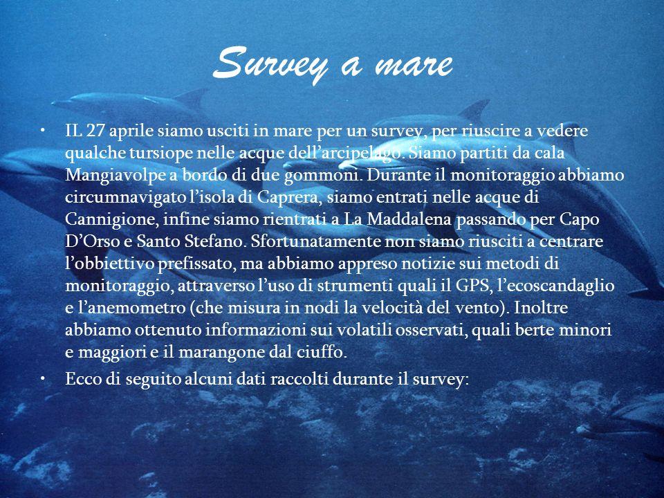 Survey a mare