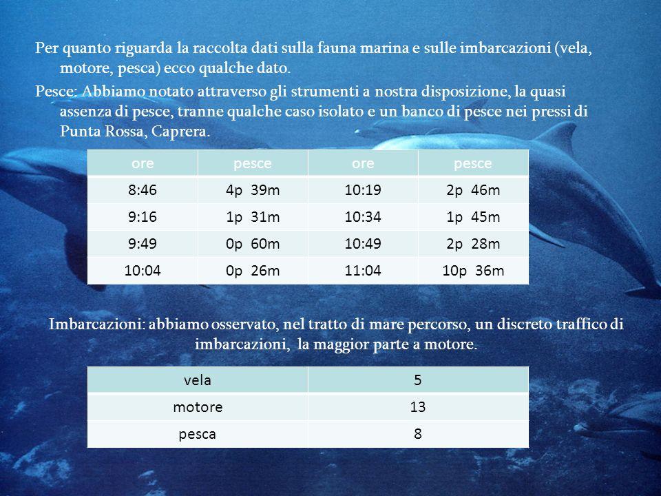 Per quanto riguarda la raccolta dati sulla fauna marina e sulle imbarcazioni (vela, motore, pesca) ecco qualche dato.