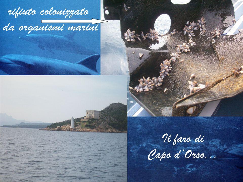 rifiuto colonizzato da organismi marini Il faro di Capo d'Orso...