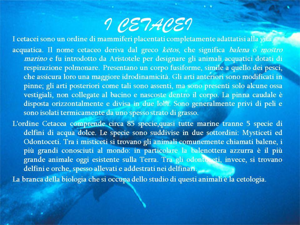 I CETACEI I cetacei sono un ordine di mammiferi placentati completamente adattatisi alla vita.
