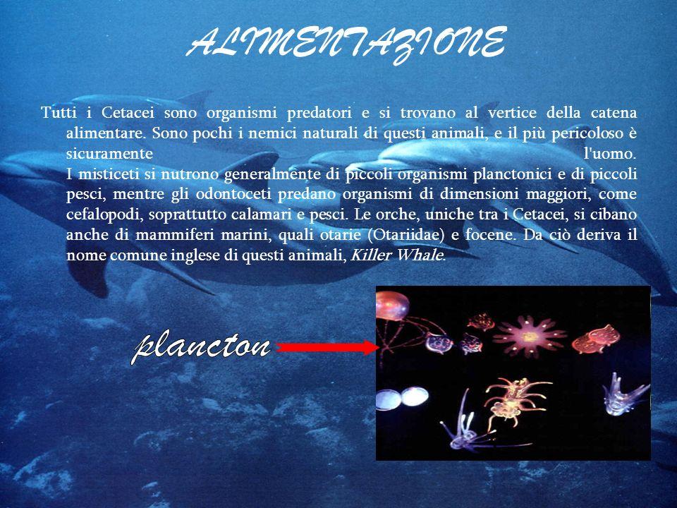 ALIMENTAZIONE plancton