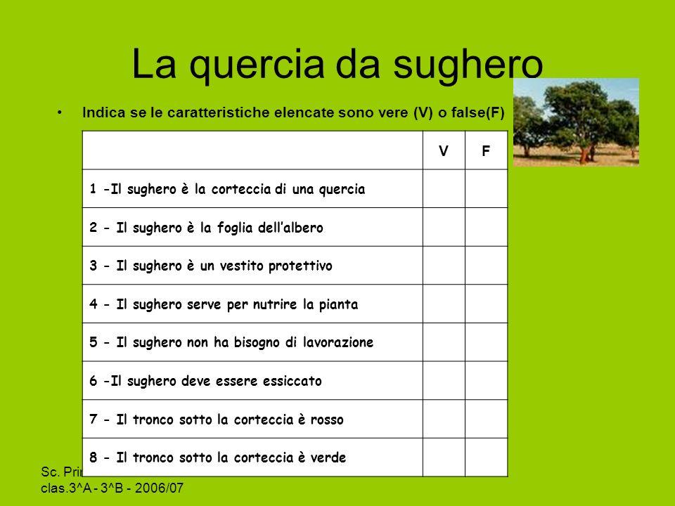 La quercia da sughero Indica se le caratteristiche elencate sono vere (V) o false(F) V. F. 1 -Il sughero è la corteccia di una quercia.