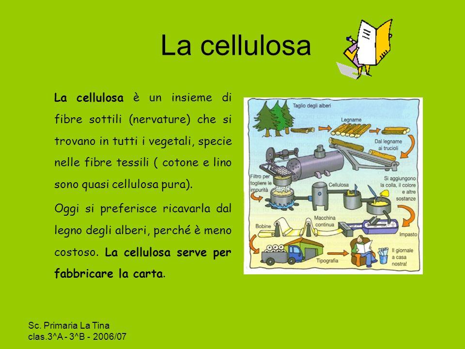 La cellulosa