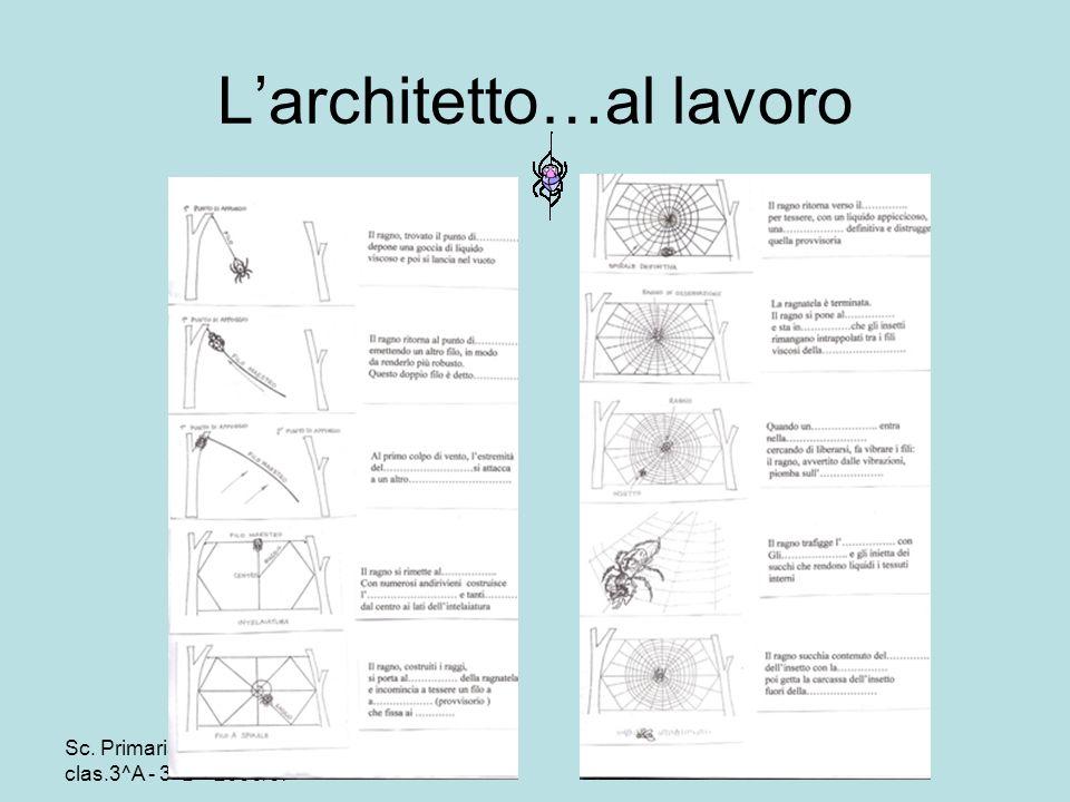 L'architetto…al lavoro