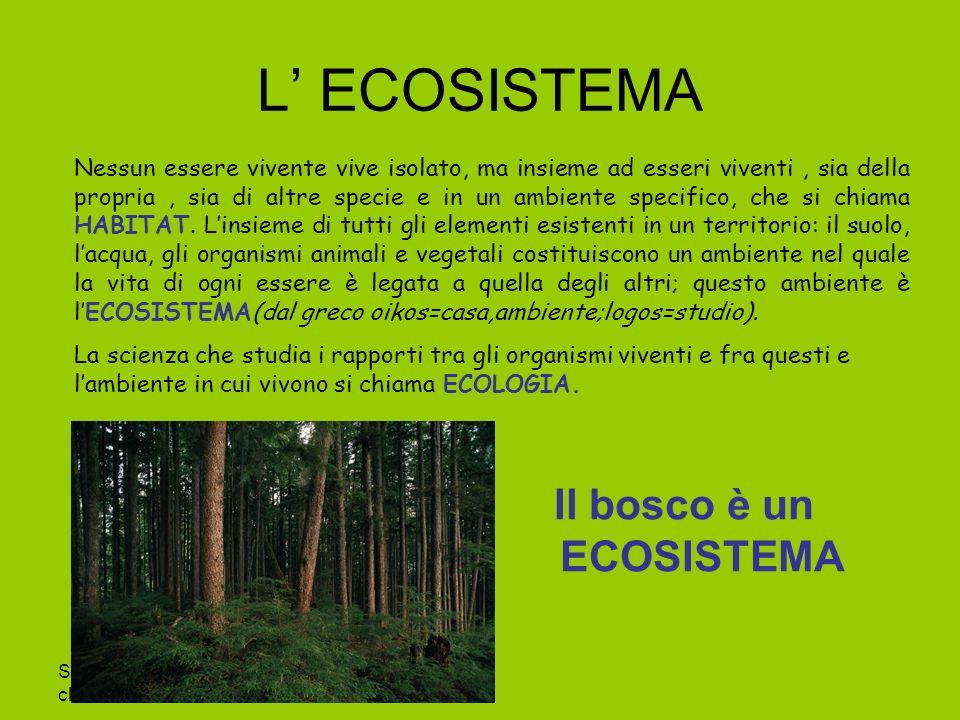 Il bosco è un ECOSISTEMA