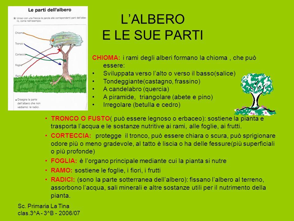 L'ALBERO E LE SUE PARTI CHIOMA: i rami degli alberi formano la chioma , che può essere: Sviluppata verso l'alto o verso il basso(salice)